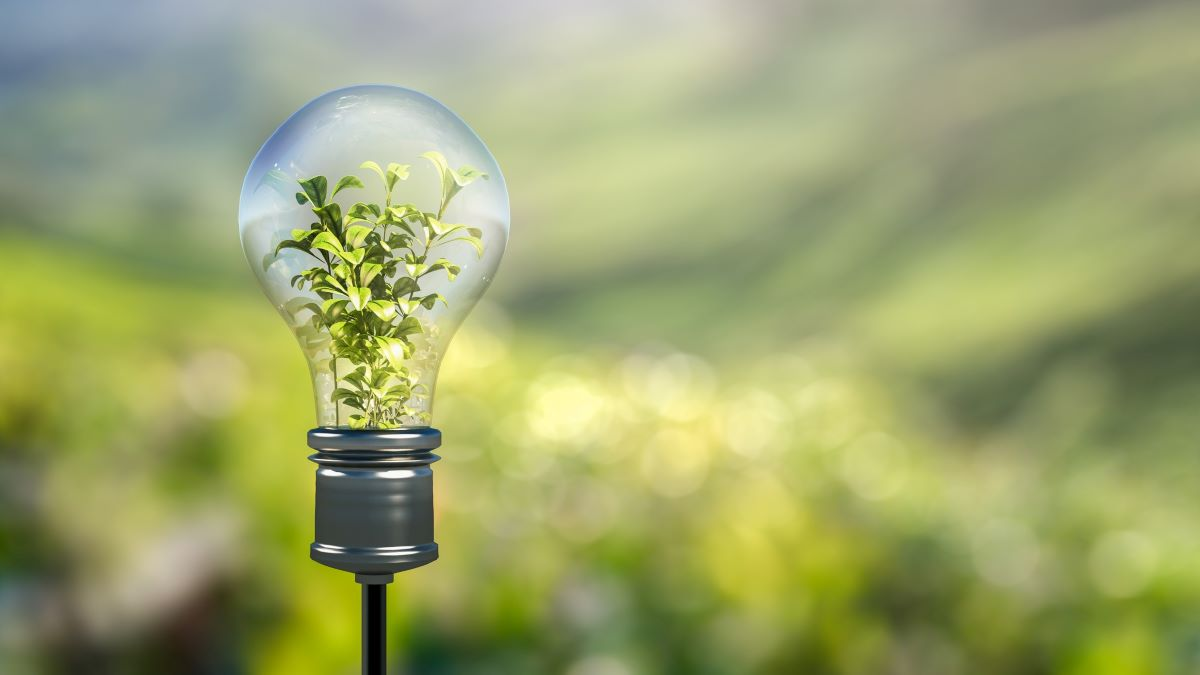 plant growing inside a lightbulb - green innovation concept