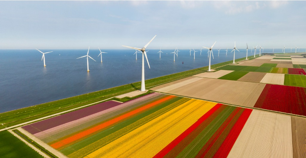 Aerial view of tulip fields and wind turbines in Netherlands