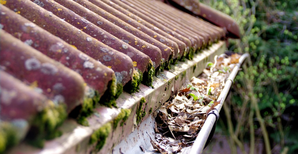 dirty roof tiles and blocked gutter