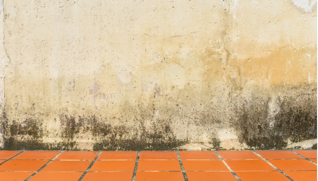 mildew and damp rising up a wall